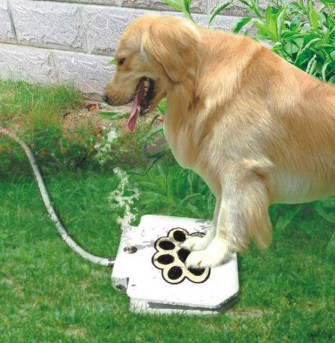 pet water fountain outdoor dog step on